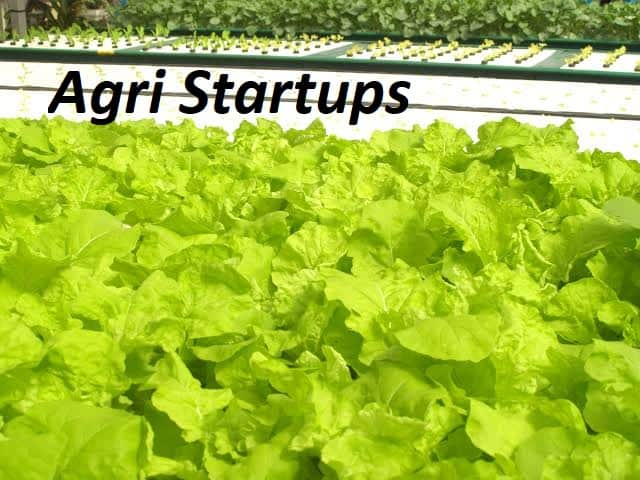 Agri-Tech Start ups to Increase the Efficiency of Dairy Sector