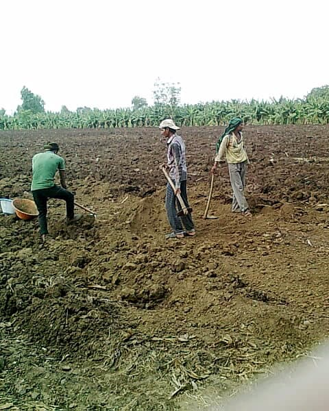 Shortage of Laours a Major Concern During Cultivation  in India