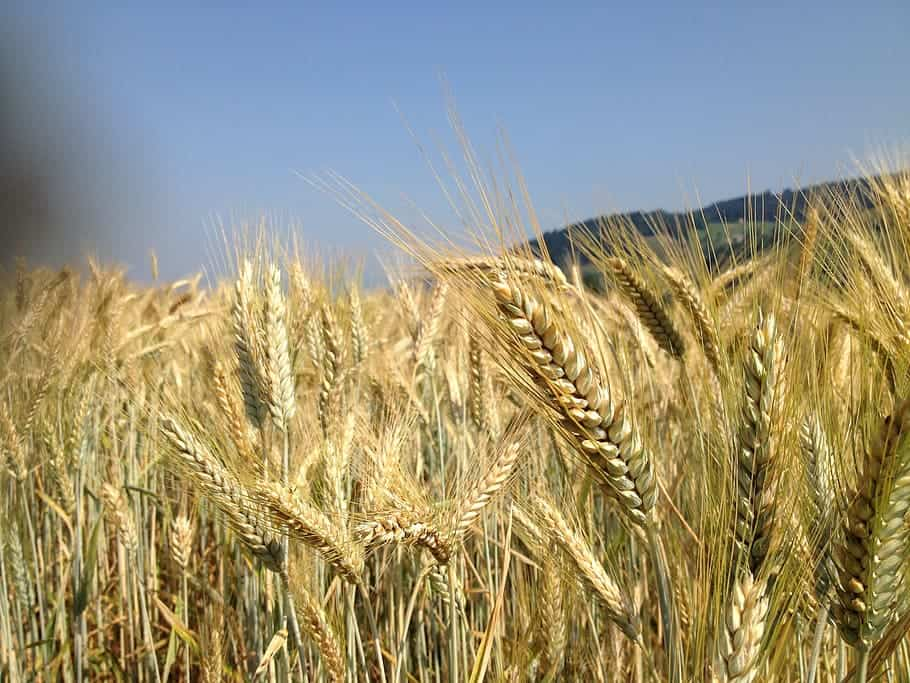 Government Assures India has Enough Food Grains for two Years