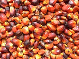 EU Introduces Curbs on Palm Oil Import Considering the Negative Impact of Palm oil Production on Environment