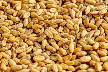Wheat, Corn, and Soybean Market saw Favourable Gains in the Agricultural Trade