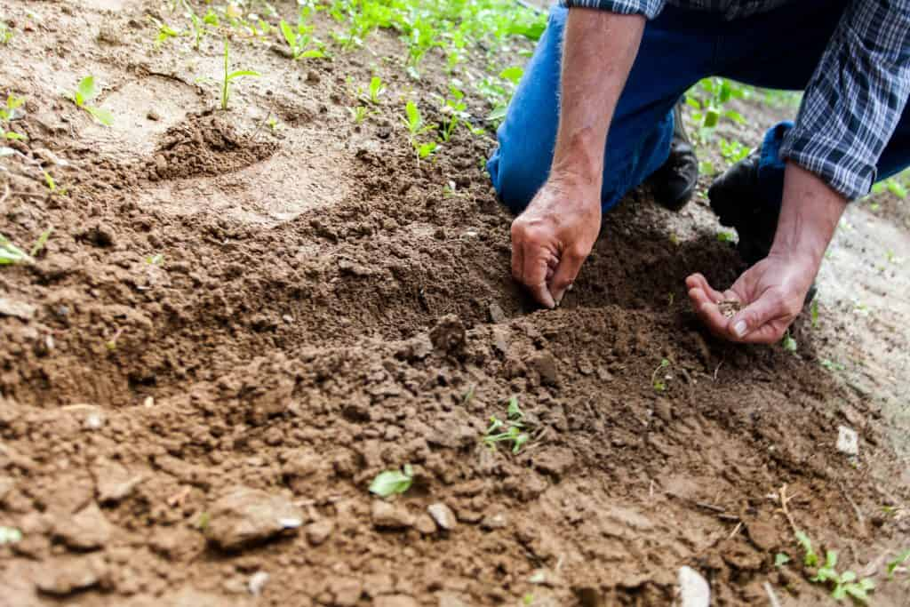 Sowing of Kharif Crop is 7% Higher This Year